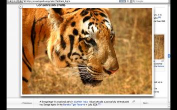 Bengalisk tiger på Wikipedia